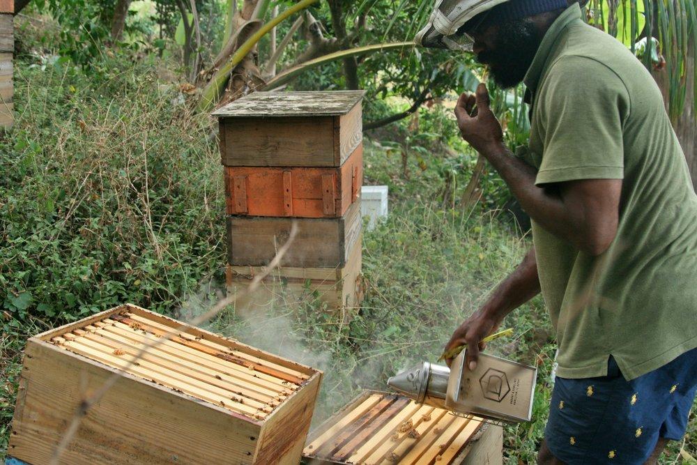 Grenada Jude Smoke Hives.jpg