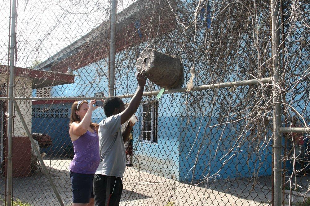 Grenada Port Bait Hive Fence.jpg