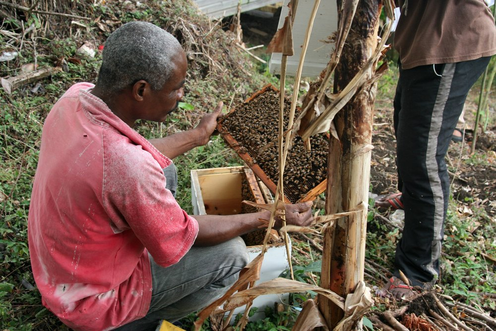 Grenada Beekeeper sitting red shirt.jpg