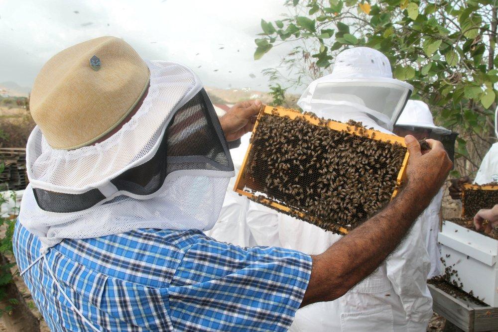 Grenada Man Frame Bees.jpg