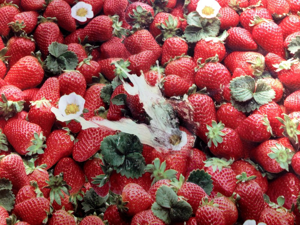 Grenada Waterfalls Strawberry wallpaper.JPG