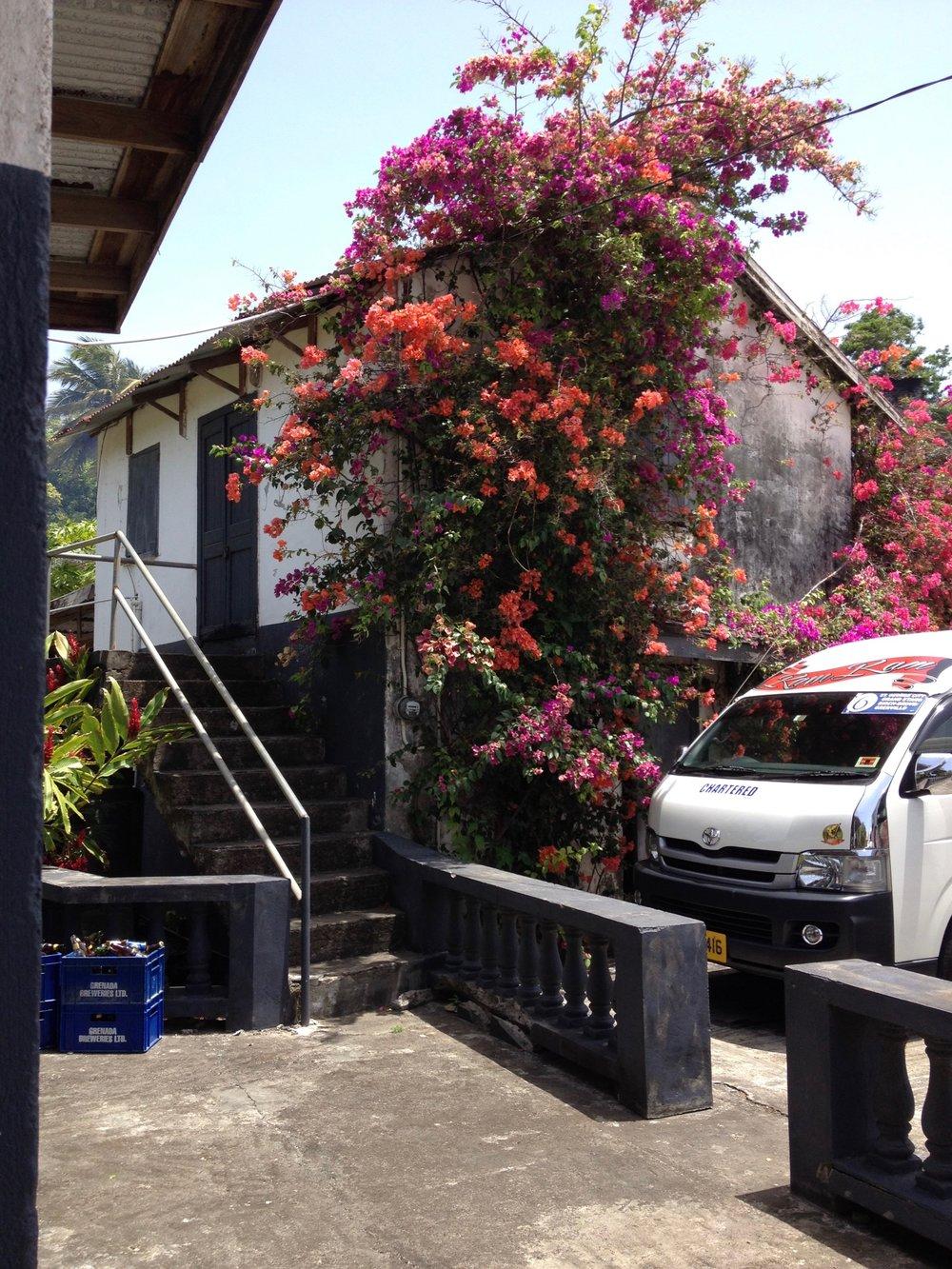 Grenada Flowers Boganvilla Van.jpg