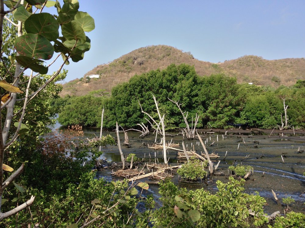 Grenada Water Seagrape.jpg