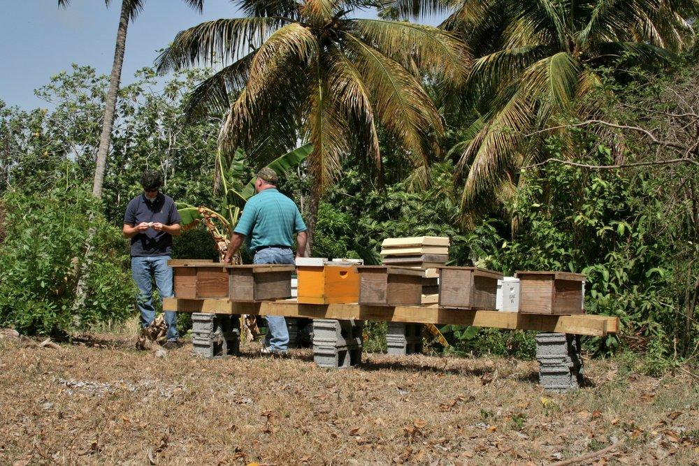 Grenada Ellis Westervelt Hives.jpg