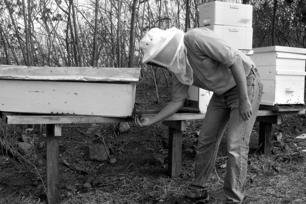 Grenada Beekeeping Workshop Ellis Hand Bees Top Bar.jpg