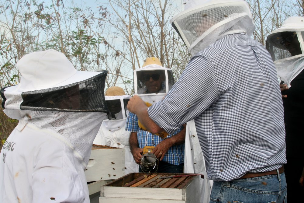 Grenada Beekeeping Workshop Ellis Group hive.jpg