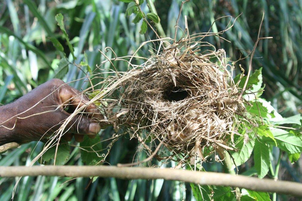 The Nest Grenada.jpg