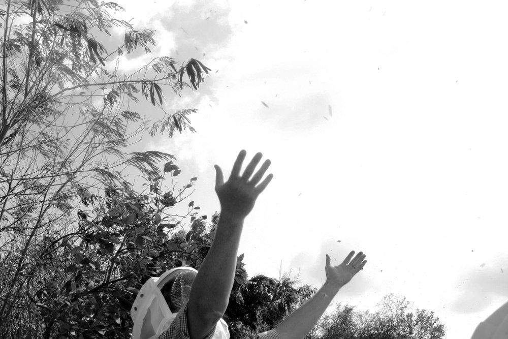 Grenada Ellis Hands Raised.jpg