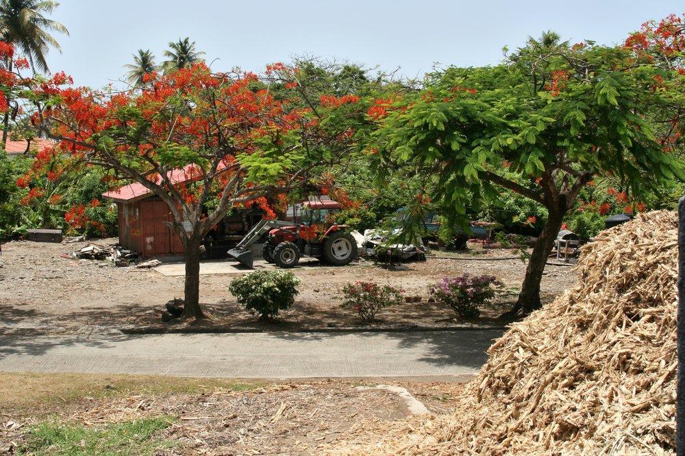 Grenada Red Flowers Tractor.jpg
