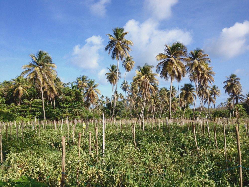 Grenada Field Agricultural.jpg