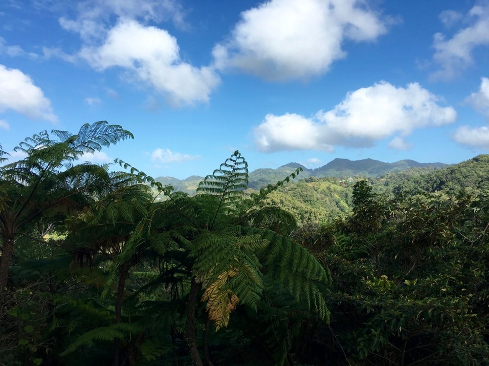 st_lucia_ferns_mountain_1500.jpg