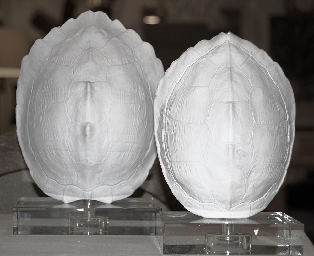 White Turtle Shells on Plexi