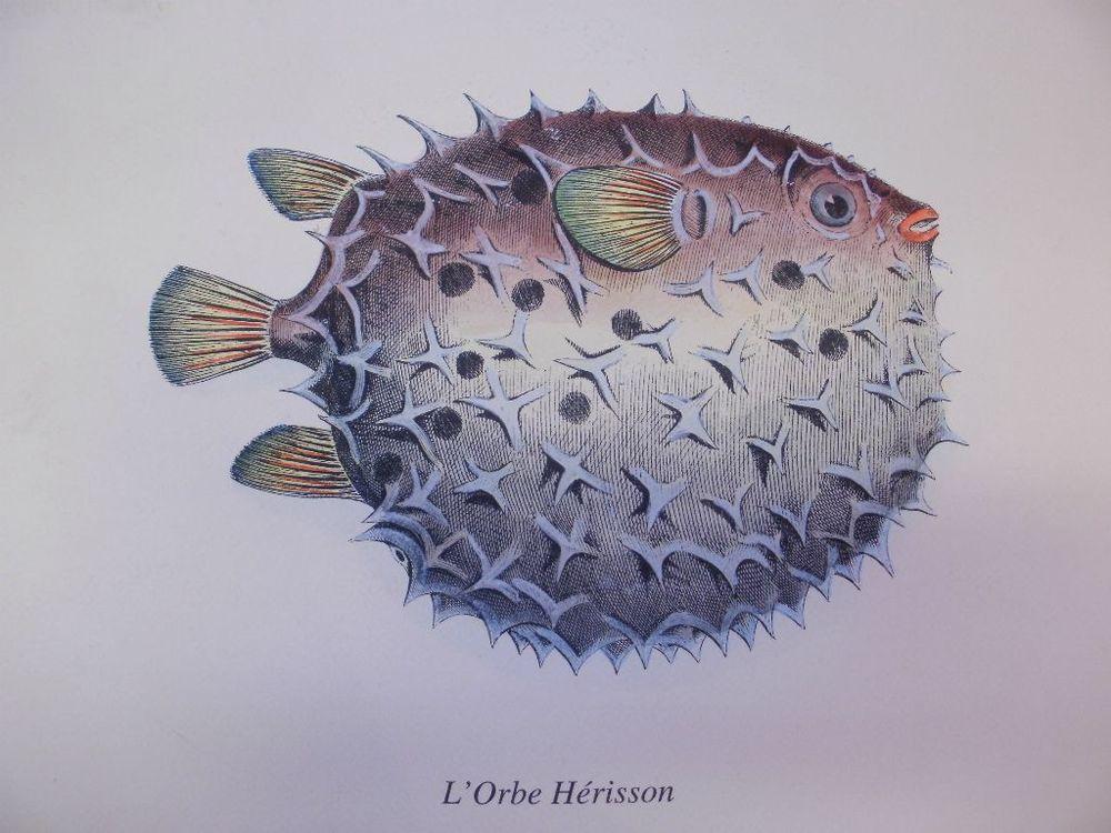 Blow Fish Print