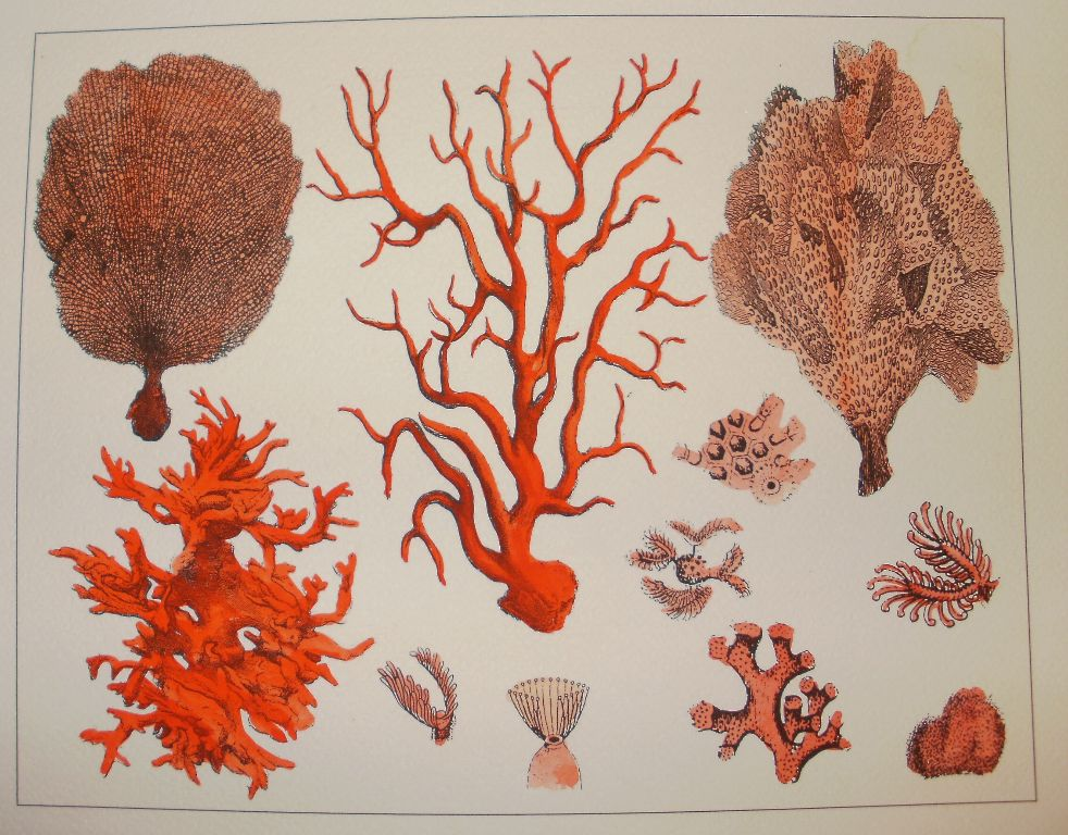 Red Coral Montage Print