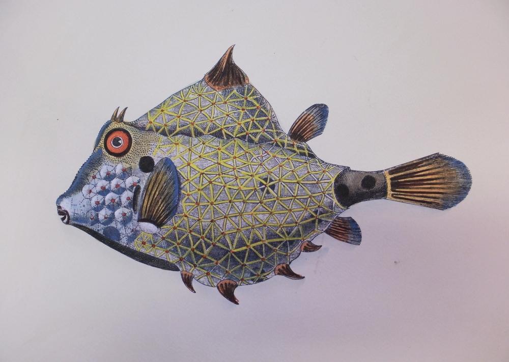 Blue Fish Print