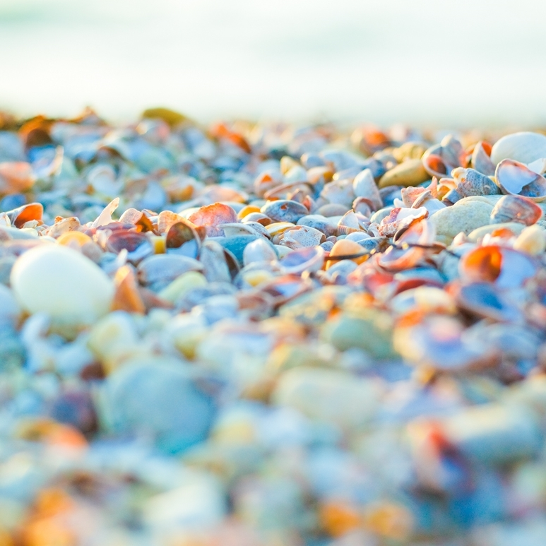 Pebbles and Shells in Coral Sunlight