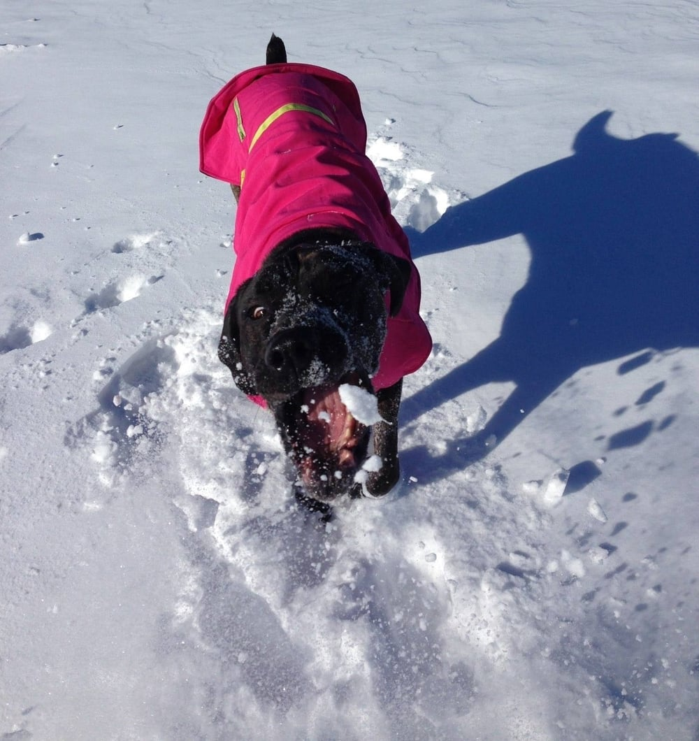 Terra loves to intercept a snowball!