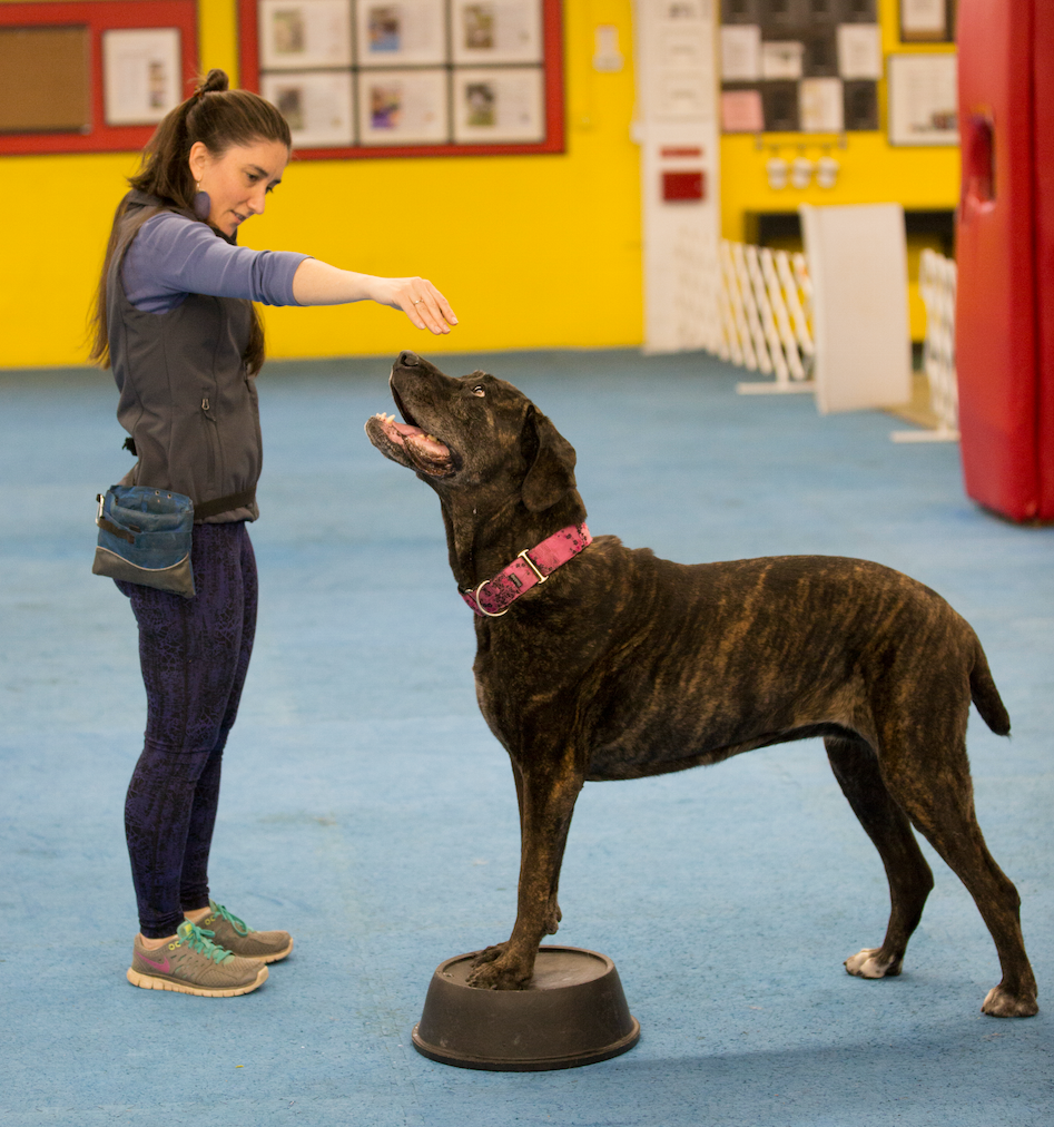 Learn tips on how to keep your best friend agile and always ready for on the go!