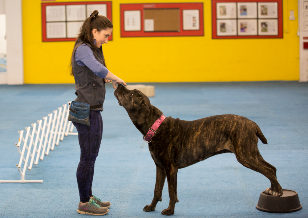Enrich, engage, stimulate, and exercise your dog by stretching and building their muscles.