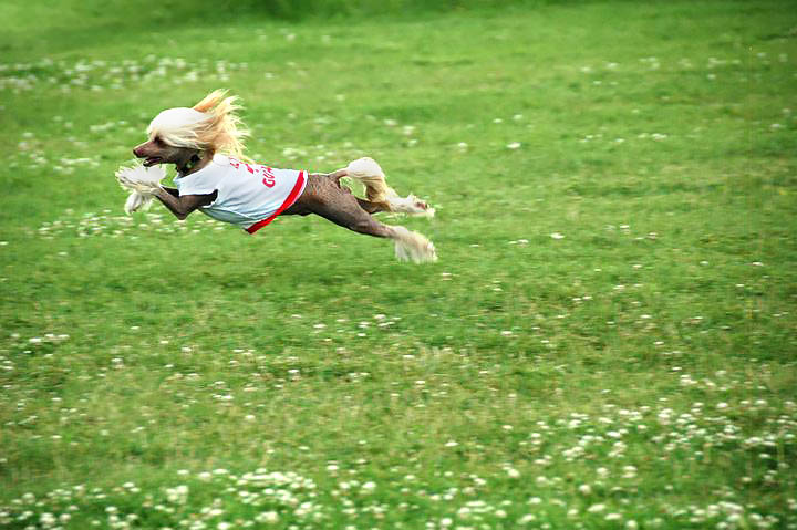 "Does your dog run to you full-tilt when they hear the word ""Come"" ?"