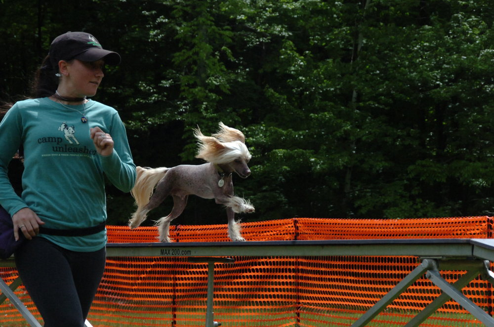 agility camp unleashed
