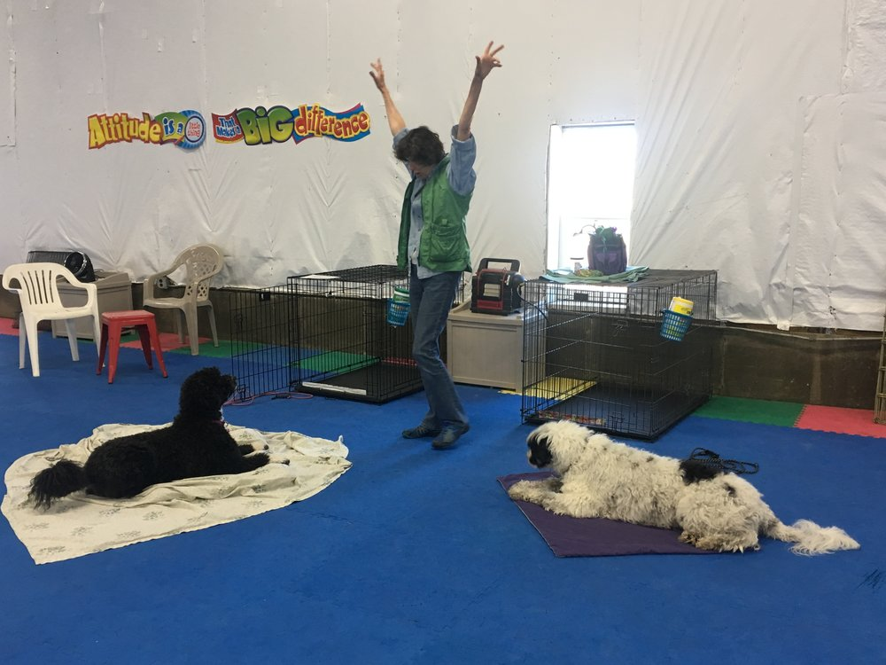 I added a new class to the Wonder Dogs program called Double Trouble, specifically for handlers with two dogs.