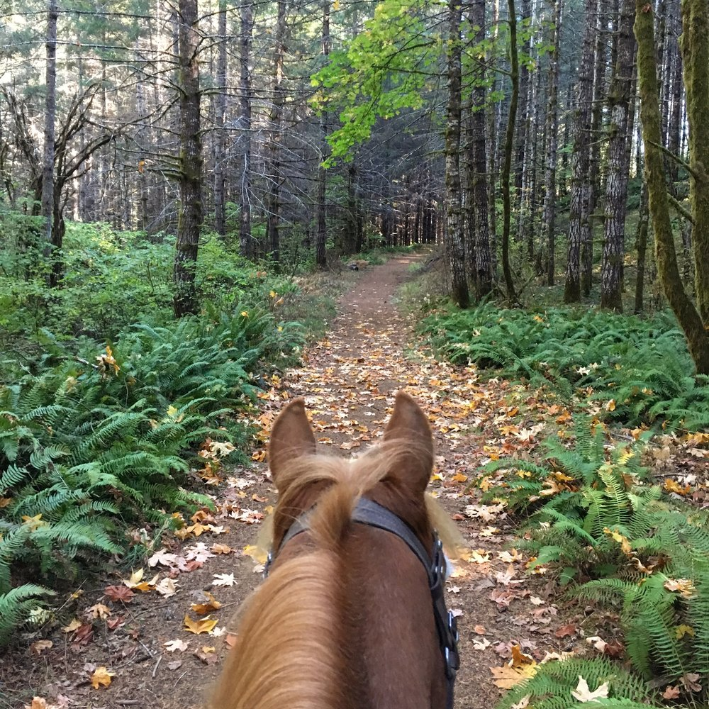 Roger and I have been exploring the forests near our barn. The plant life is so different here!