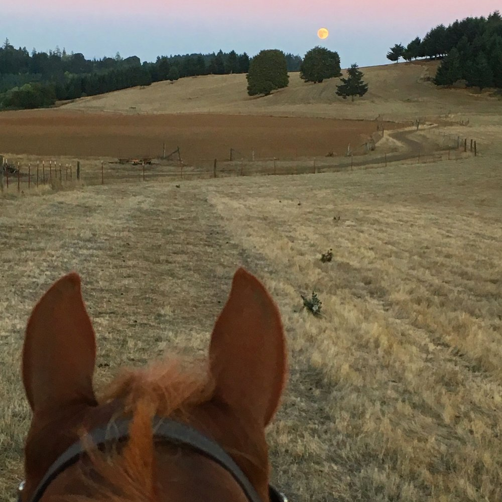 A Friday night full moon on the farm. The farm where Roger lives raises grass-fed sheep and organic grass hay. We can ride around the property if we feel like staying close to home.