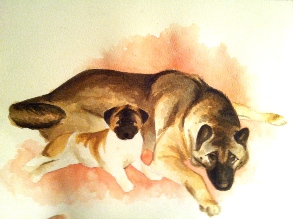 These are my grandparents' akitas, Bear and Missy, that I drew from an old photo. Bear passed away this past summer, and Missy is a little over 10 years old now. It was a crummas gift for my grandma, and she loved it!