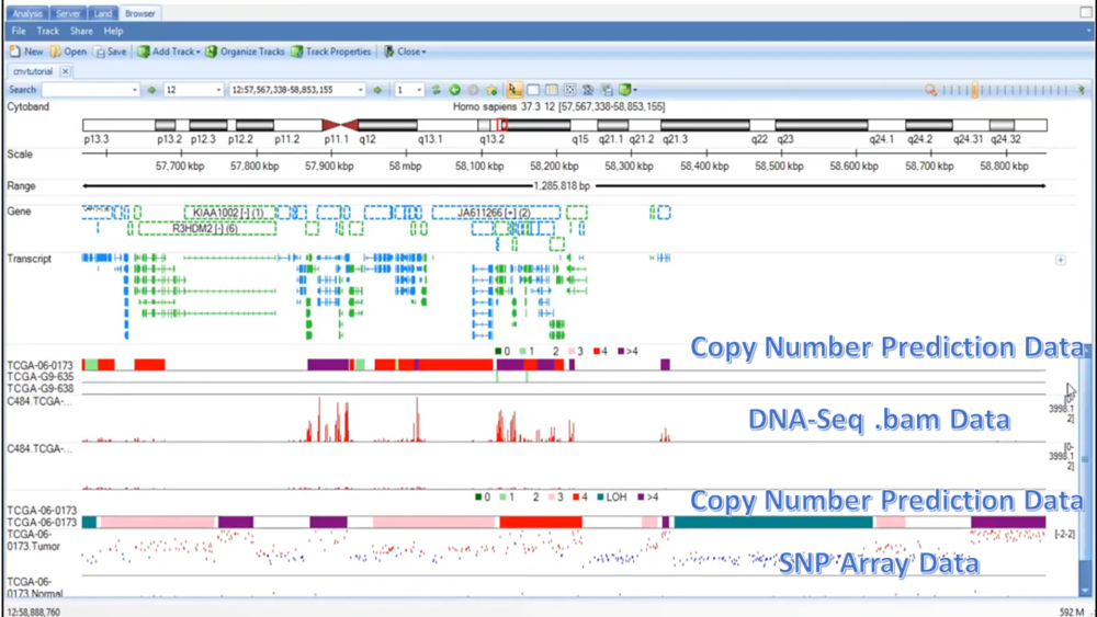 Copy number variation data from DNA-Seq and SNP array datasets.