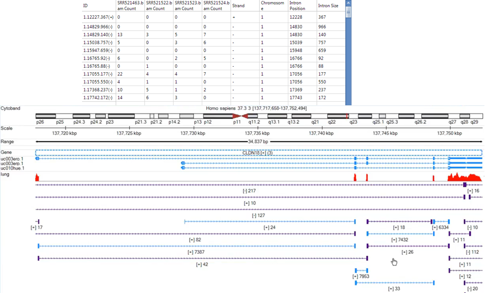Exon junction report and genome browser view.