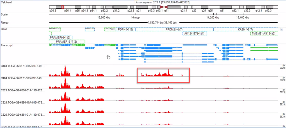 Genome browser view of coverage data. The highlighted example clearly has an increased coverage for this genomic region, while the coverage is comparable in adjacent region.