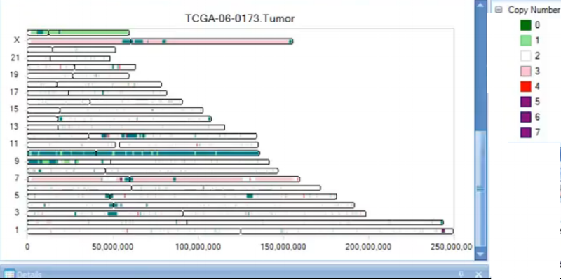 Segment Chromosome View displays copy number predictions along chromosome schematics. As we can see, again, the TCGA tumor sample has a loss of signal on chromosome 10.