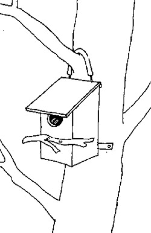 Placement - Ideally, the box should be at least 4 metres from the ground, to provide protection from pests, and a bit of privacy. The box should face away from prevailing winds, and should not face towards the afternoon sun. If it is not possible to avoid both the winds and direct sunshine, having a baffle attached will help.Hang your nestbox using sturdy wire or chain secured to the back of the box. Sheath the wire in old hose pipe to prevent damage to the tree.  Attach the bottom using a flexible metal strip approximately 30 mm from the bottom of the box, and nailed to the tree with a couple of heavy gauge flat head nails. Don't drive these nails in all the way, allow for the growth of the tree and the possibility of relocating the possum box in the future.