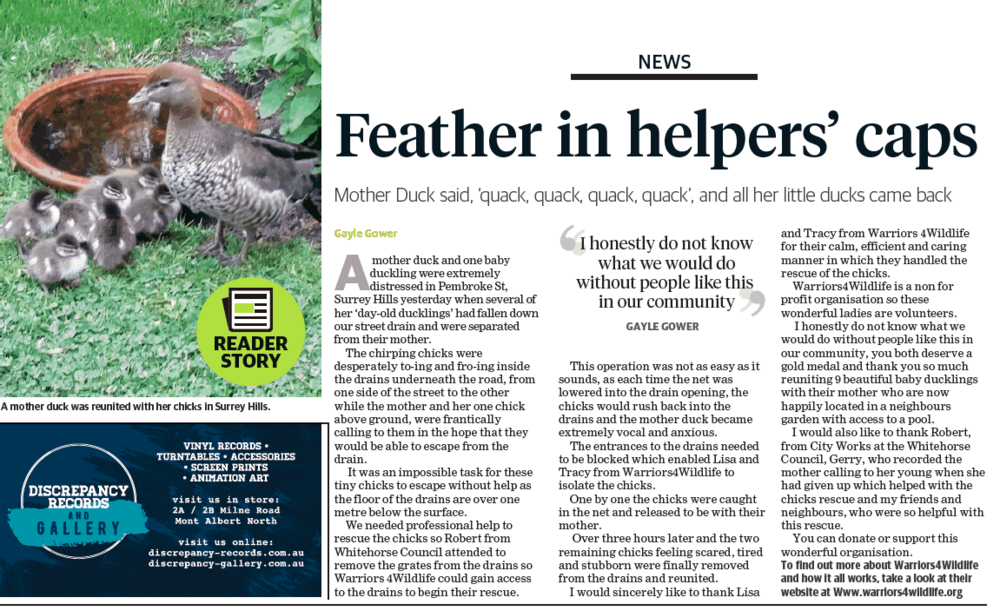 THE MAROONDAH LEADER OCT 29TH 2018  DUCKLING RESCUE