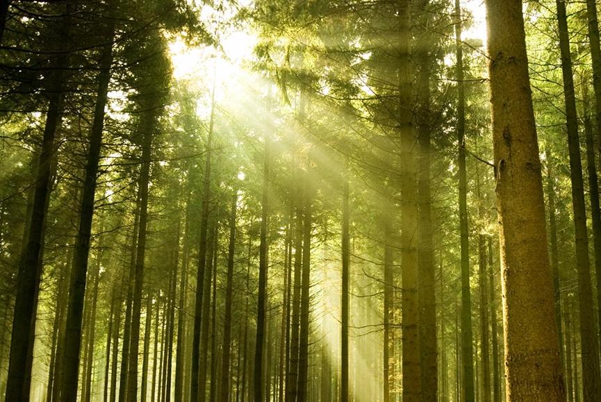 forest-7570999Medium.jpg