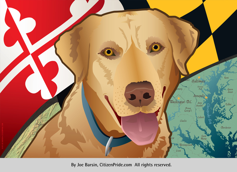 MarylanD YelloW Lab by Joe Barsin of Citizenpride.com