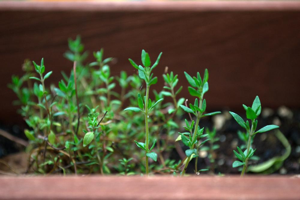 Life As Liz || Gardening.jpg