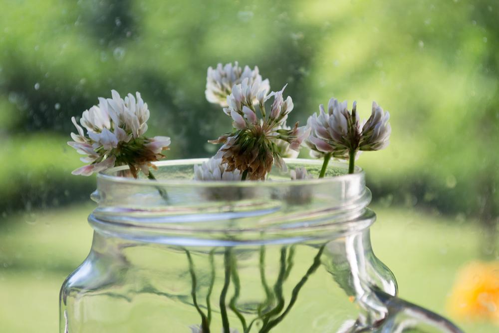 Rori Picks Me Flowers || Life As Liz