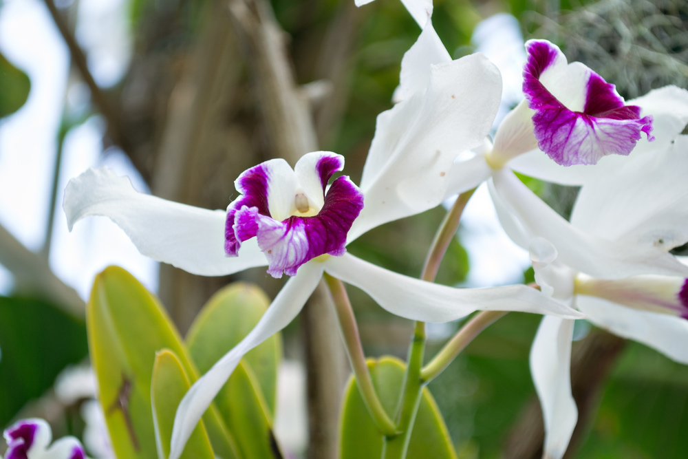 botanical garden orchid_edited-1.jpg