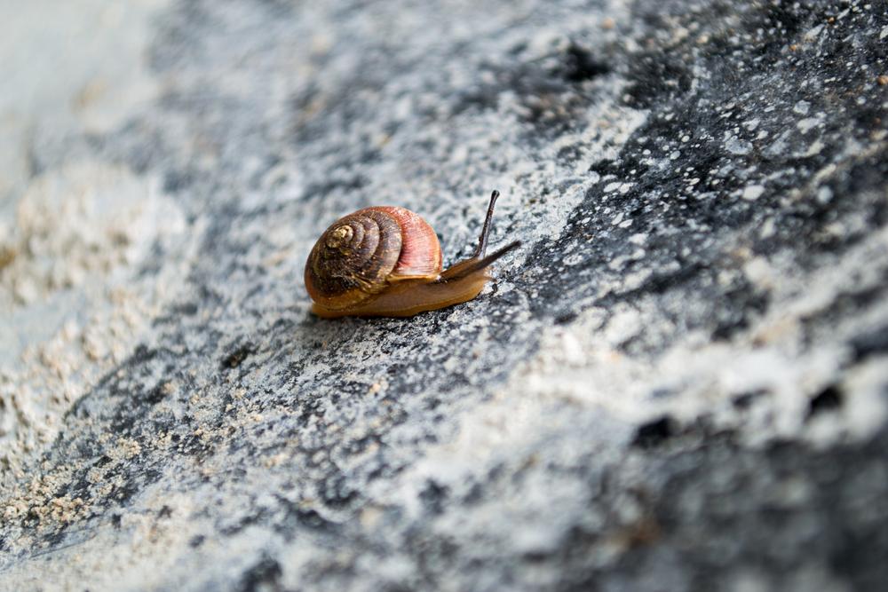 snails_2477_edited-1.jpg