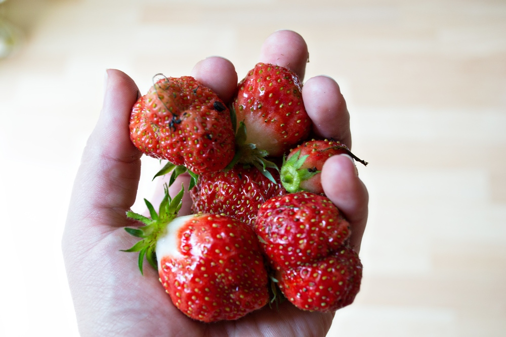 (strawberries from my garden)