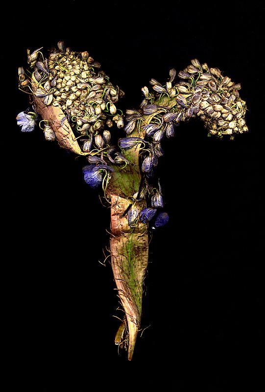 Mutant flower A3P.jpg