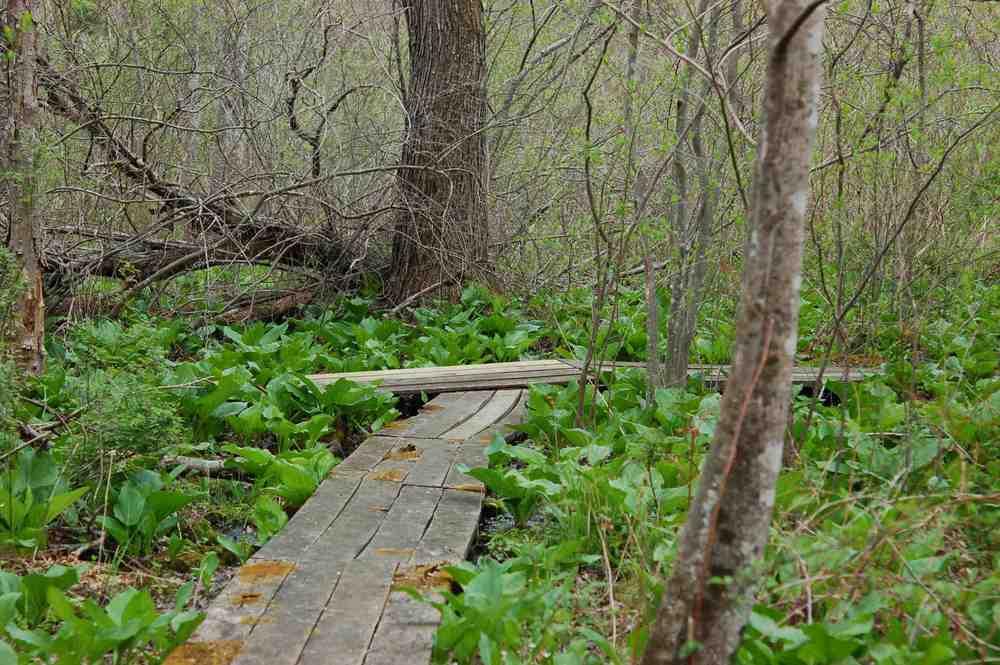 creek9.jpg