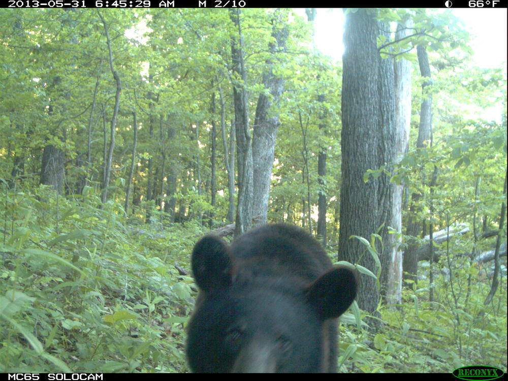 Bear0172.JPG