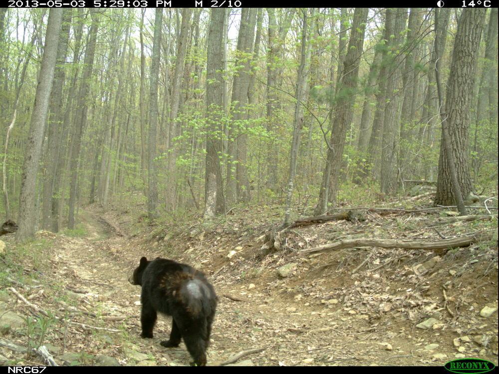 Bear0022.JPG