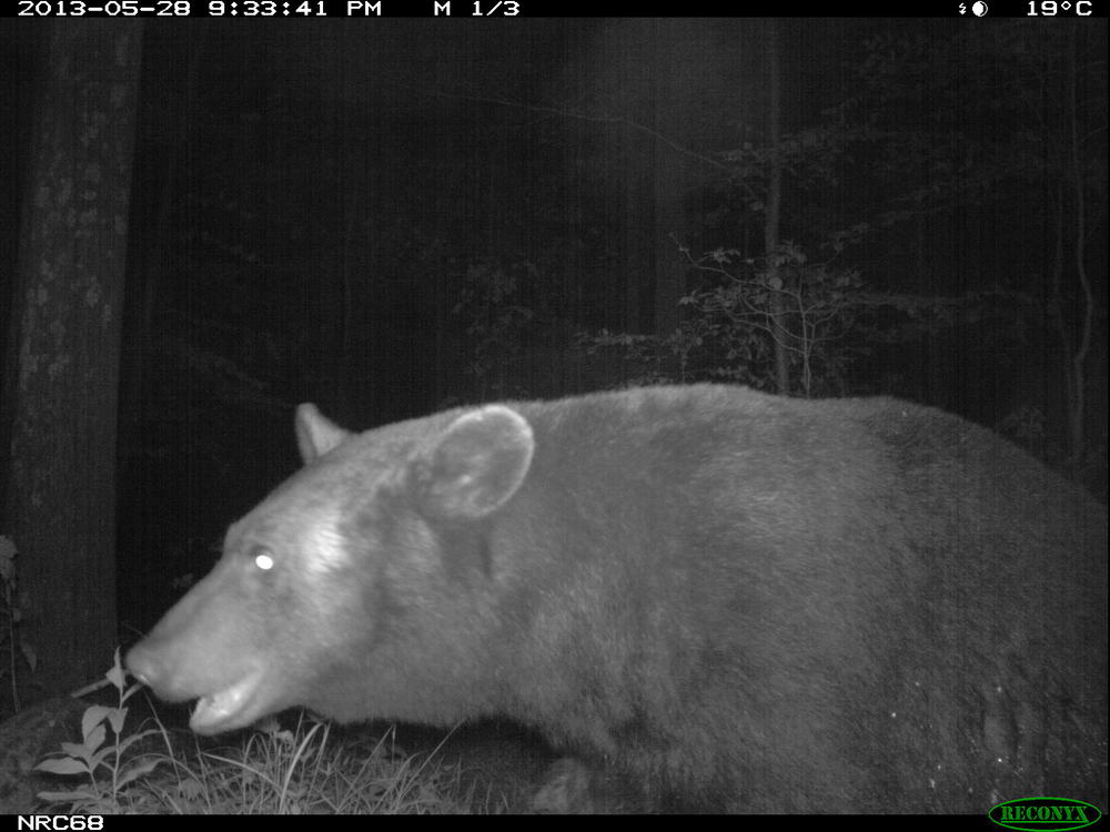 Bear0175.JPG