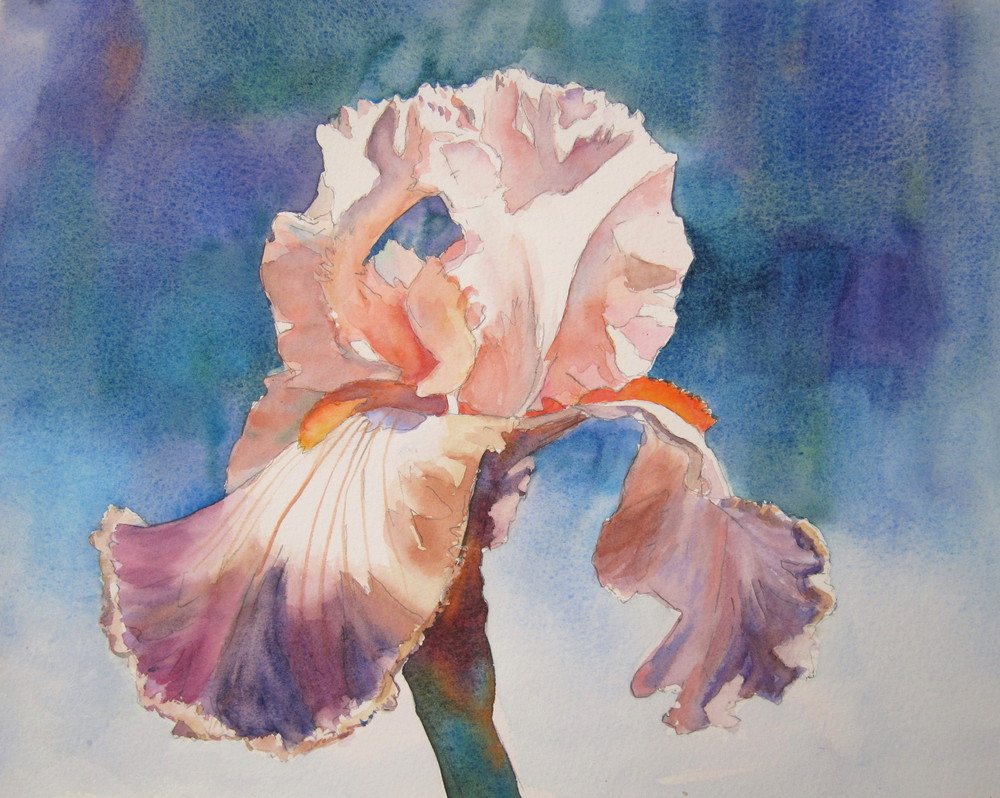 "Spring Iris  11"" X 15""  Watercolor"