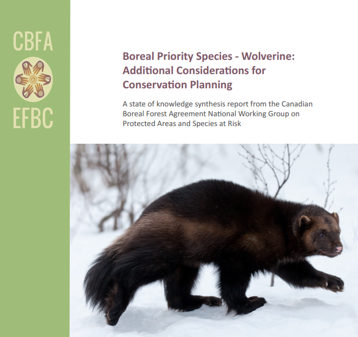 Wolverine Conservation Planning Report developed for the Canadian Boreal Forest Agreement (CBFA)