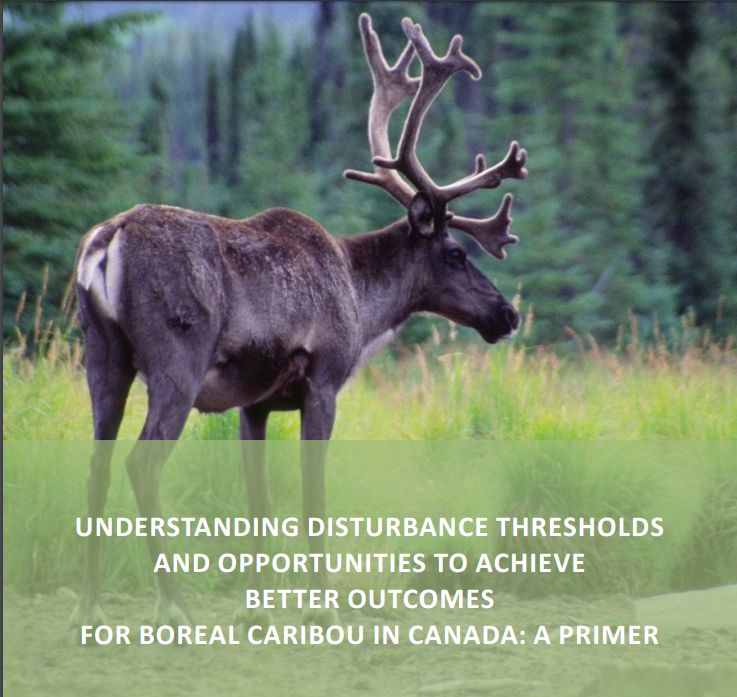 Boreal Caribou Disturbance Thresholds Primer developed for the Canadian Boreal Forest Agreement
